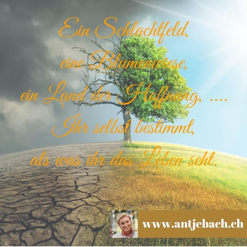 Antje Bach, Zitat, Zitatekarte, inspiriert, Selbstbestimmung, Sinnstiftung, Leben